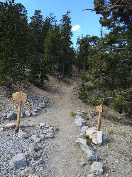 Bristlecone and Bonanza trail junction.
