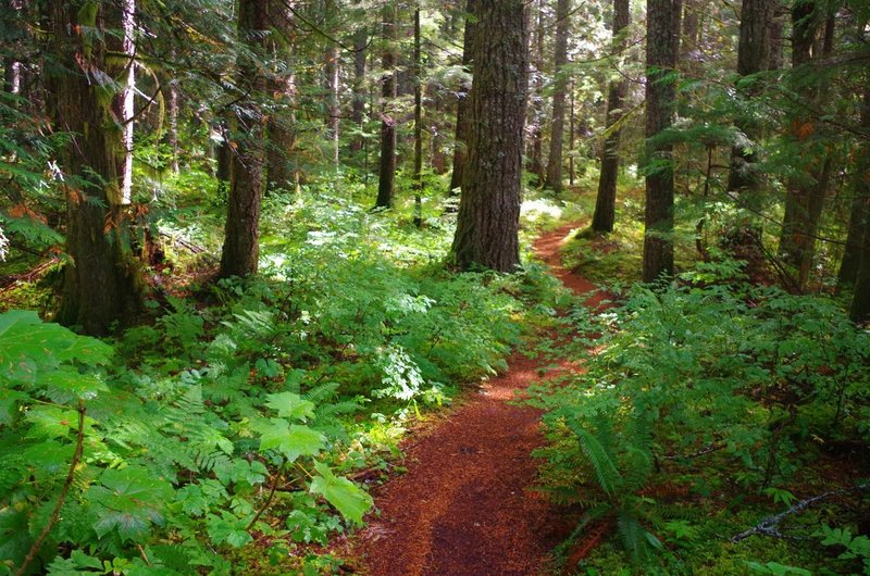 Lower part of Burnt Lake Trail. Photo by Gene Blick.