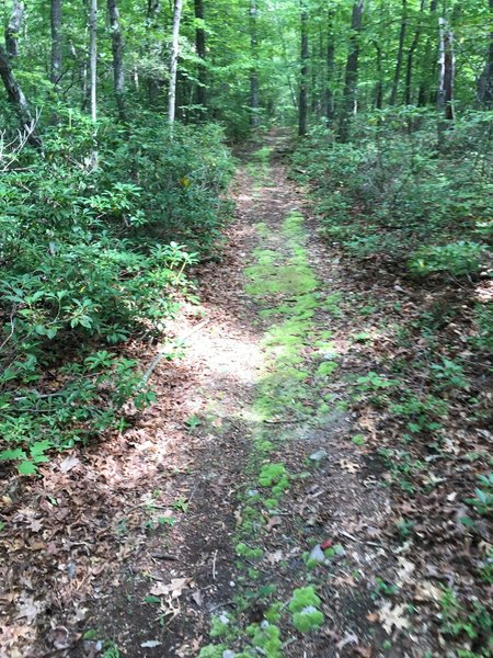 Typical road on Minisink Trail.