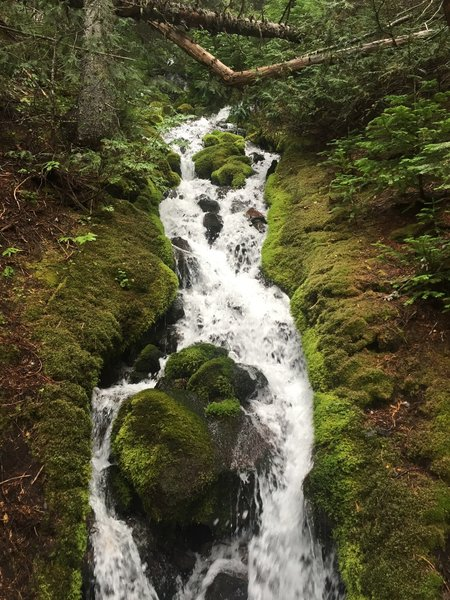 One of the many cascading creeks that flow by (under) the trail.
