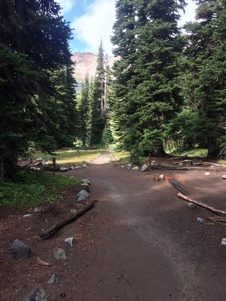 The trail cuts through the Glacier Basin campsites (primitive but nice). Many are fully shaded and look well draining.