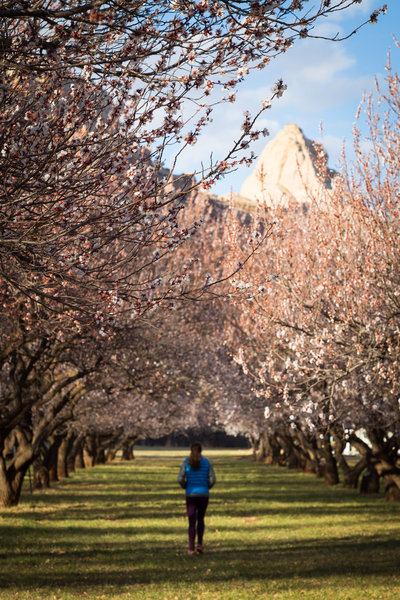 Frolicking through Fruita's famous orchards beside the Fremont River Trail.