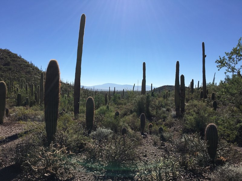 From Coyote Pass Trail, you can see the Mica Mountain (Saguaro National Park Rincon Mountain District) in the distance.