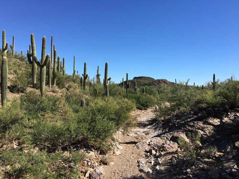 View of the trail and surrounding desert.