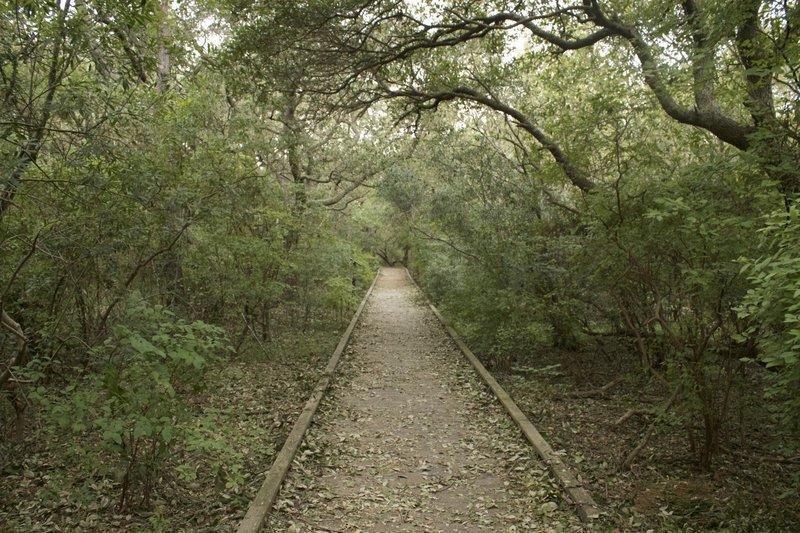The boardwalk trail.