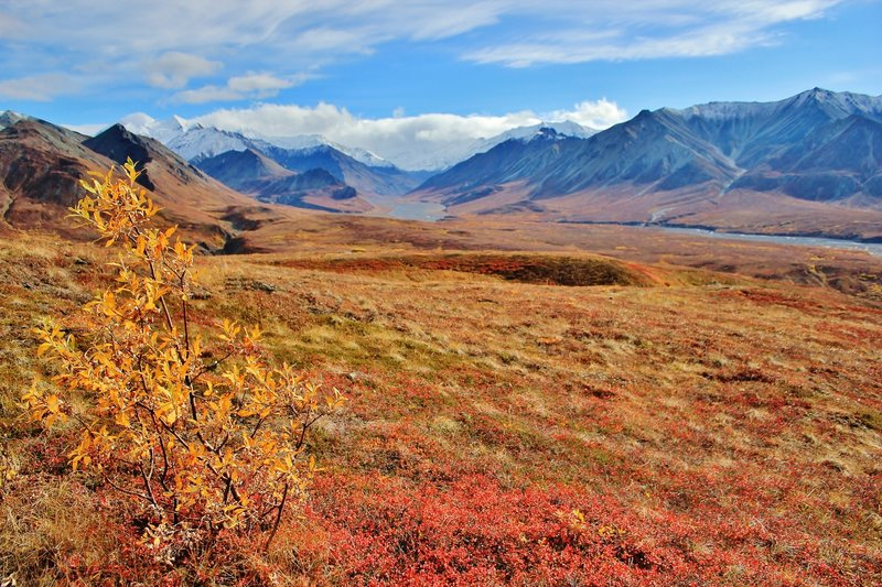 Fall colors across the Tundra near Eielson Visitor Center. with permission from David Broome