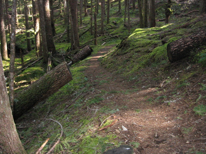 Lots of moss on the lower elevation part of Cast Creek Trail.  Photo USFS.
