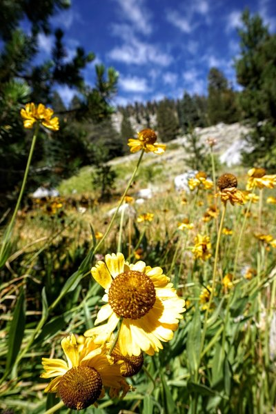 Trail flowers.