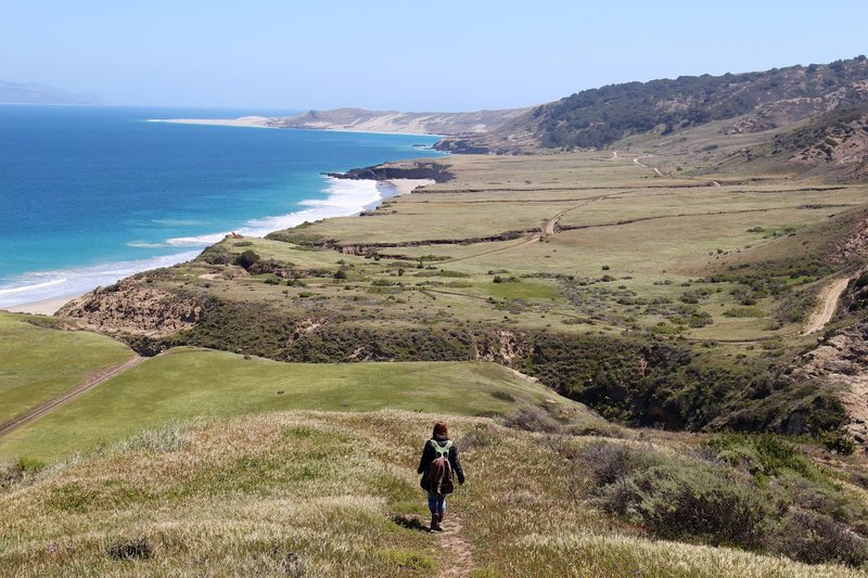 View of Torrey Pines and the shore from the Cherry Canyon Trail.