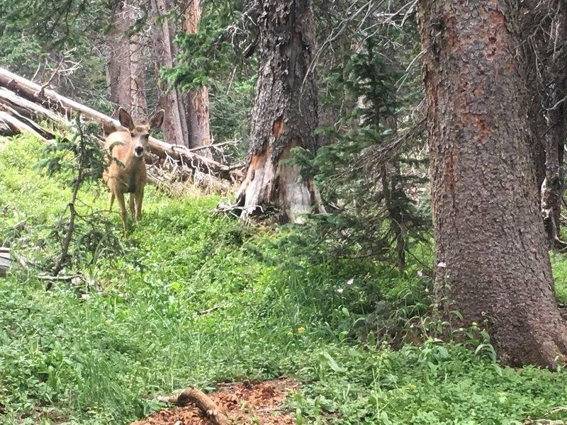 Deer near the campsite.