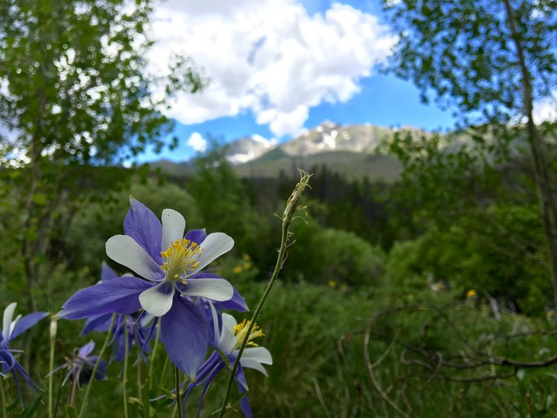 View of Tenmile Peak and Peak 4 from the trail. Roses and Columbine are a plenty here.