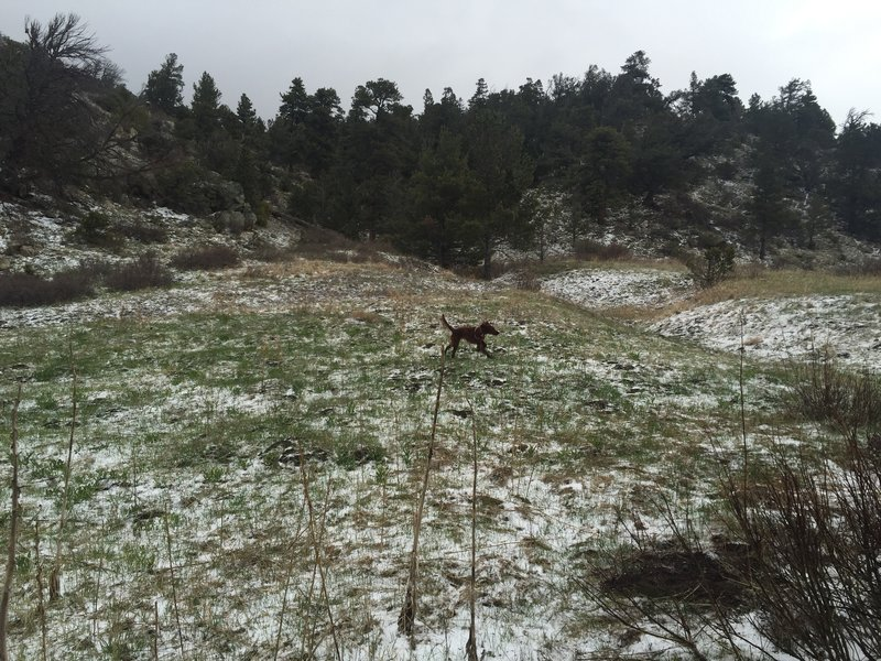Puppy enjoying a romp in the snow off Mosca Pass Trail.