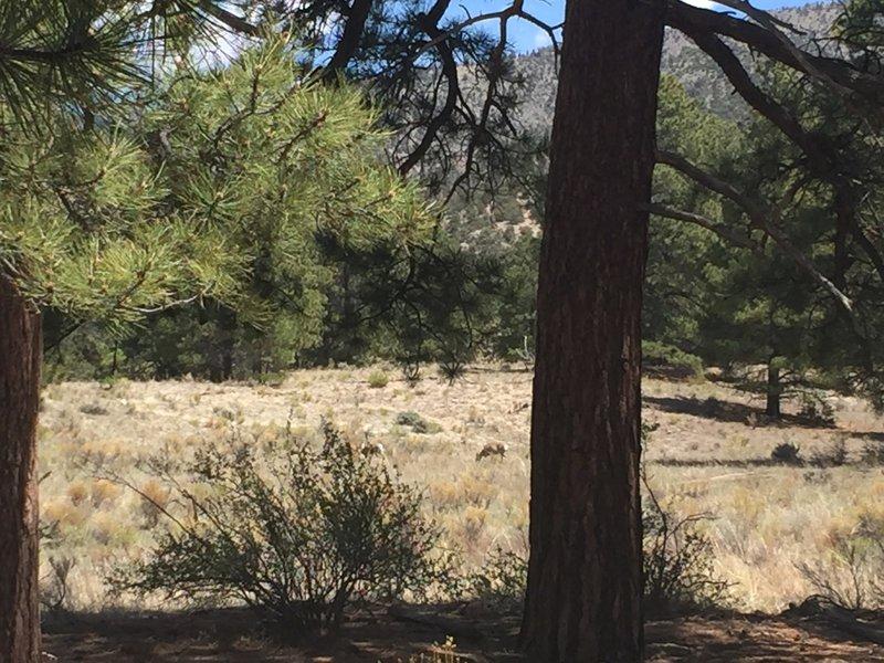 Deer grazing off Sand Ramp Trail.