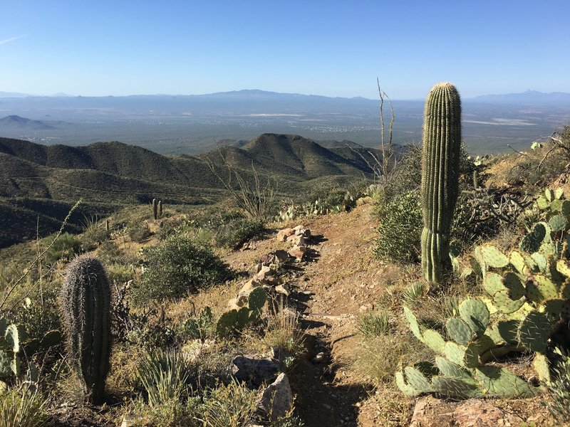 Looking out over Avra Valley with Sierrita Mountains in the (middle) distance. On the far right you can make out Baboquivari.