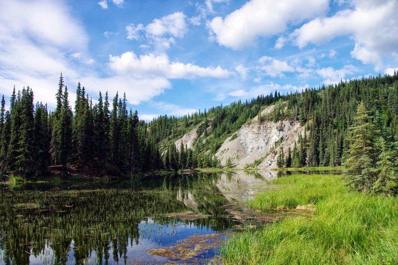Denali, Horseshoe Lake. with permission from Rumiana Koynova-Tenchova