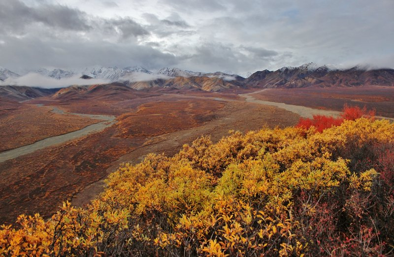 Fall at Polychrome Overlook. with permission from David Broome