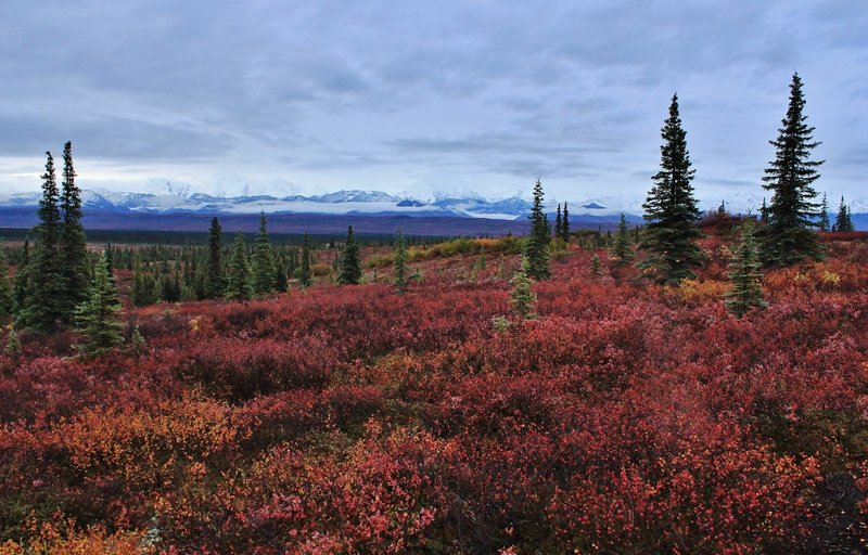 Morning view of the cloudy Alaska Range. with permission from David Broome