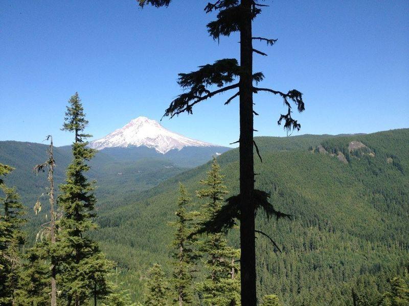 Stunning views of Mt. Hood reward hikers on this steep trail. Photo by Jesse Aszman.