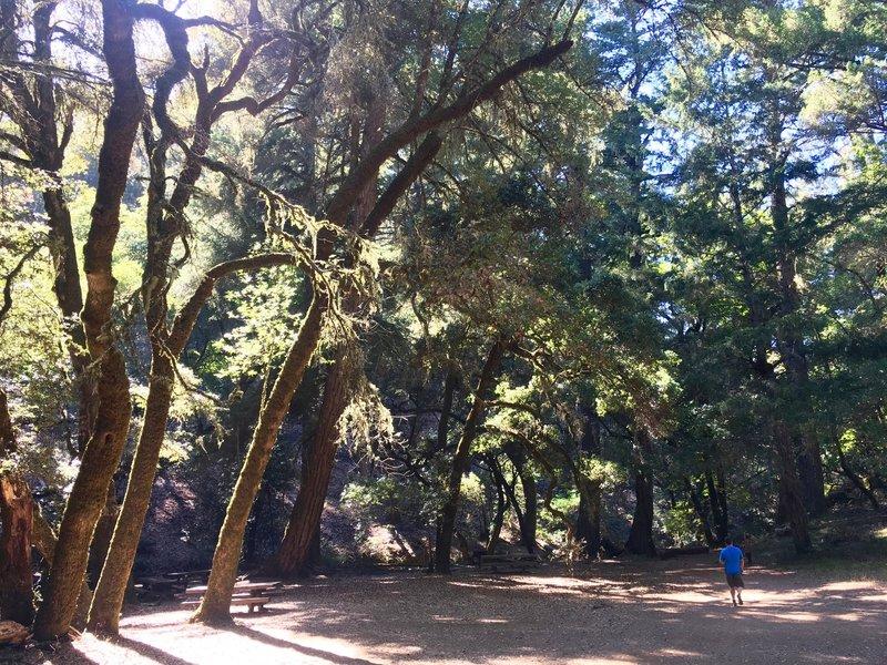 The Laurel Dell picnic area.