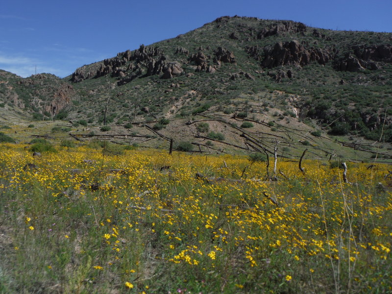 Fall wildflowers in Cabra Canyon looking northeast towards Guaje Mountain.
