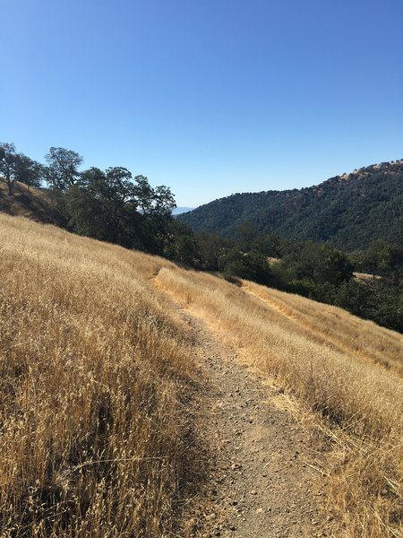 Jackson Trail.