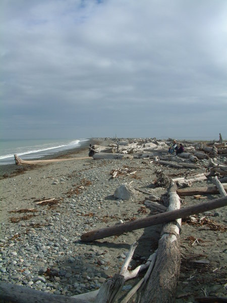 Driftwood along Dungeness Spit