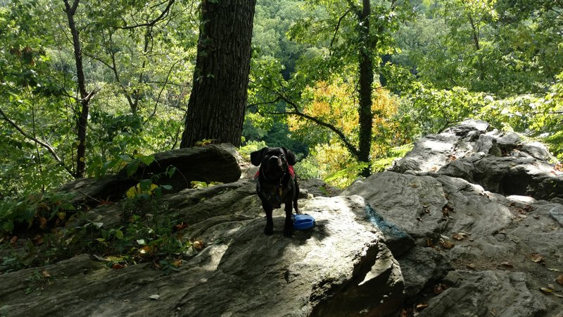Mr. Cole checks out the rocks near Lovers Leap.
