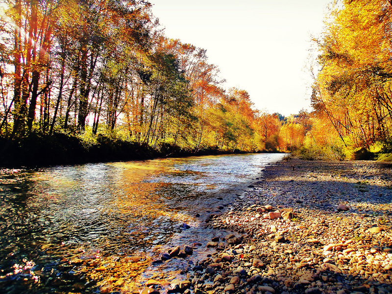 Along the creek on Snoqualmie Valley Trail North.