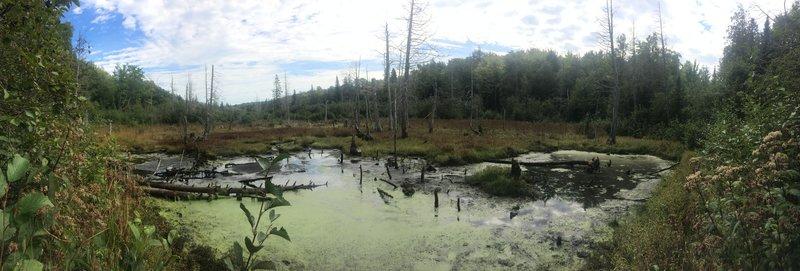 Beaver Pond where creeks meet.