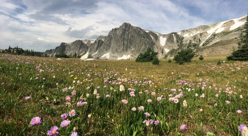 Flower-filled meadows and the Snowy Range.