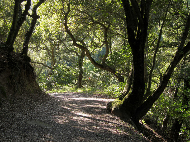 Forest in Briones Regional Park.