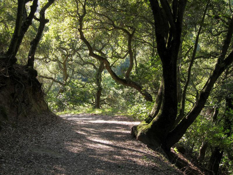 Forest in Briones Regional Park.