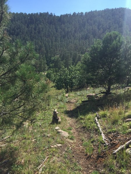View down the west descent on the Cairn Trail in Custer SP, looking across the valley of Grace Coolidge Creek.