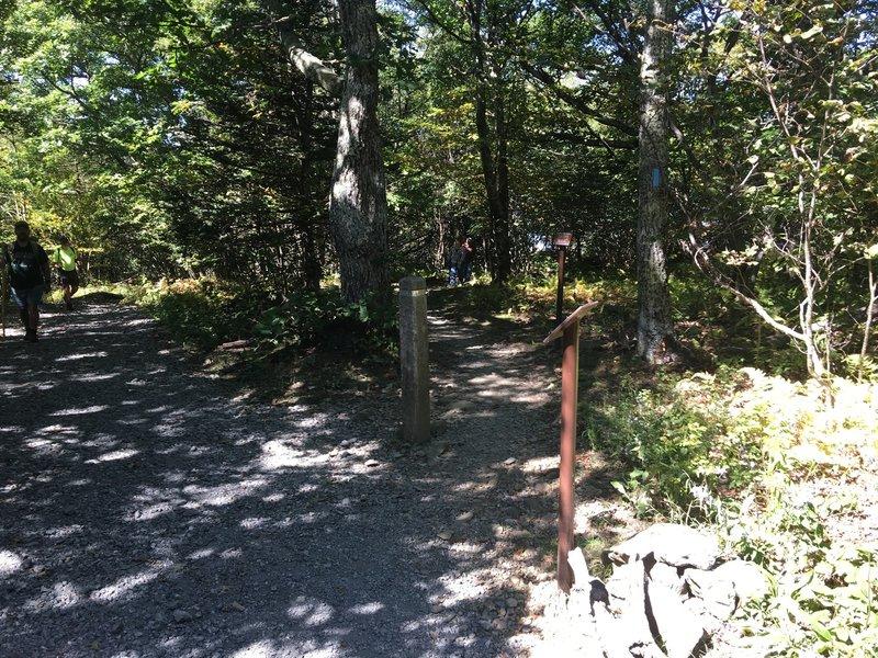 Trail Intersection: Upper Hawksbill Trail and Salamander Trail.
