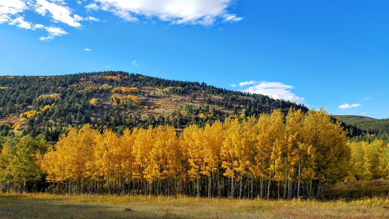 Fantastic fall colors so close to Boulder.