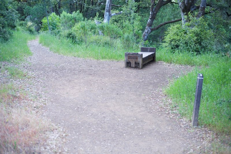 The San Andreas Fault Trail breaks off to the left and works it's way into the woods.  The bench offers a place to rest.