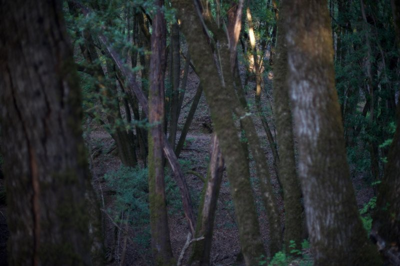 The trail is a loop that is close to the Franciscan Loop Trail.  You can see it through the woods.