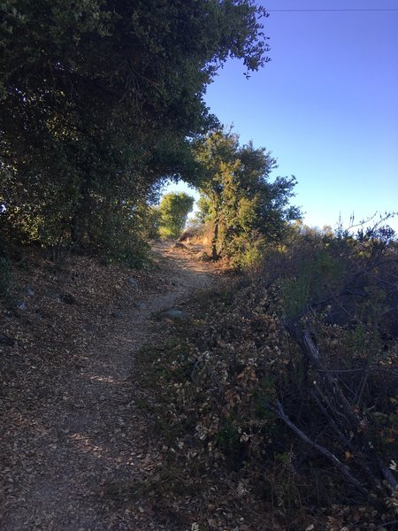 The trail as it leads to to a vista where you get great views of the bay area.