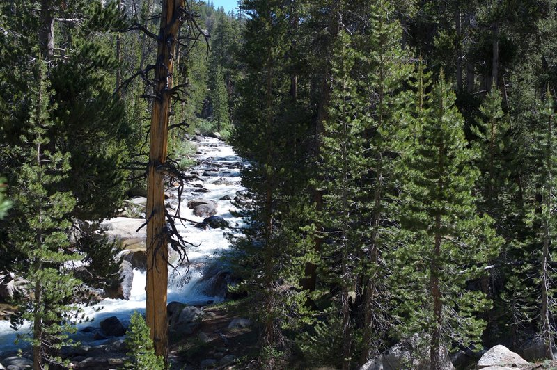 The trail rises above the Dana Fork of the Tuolumne River in the Spring.