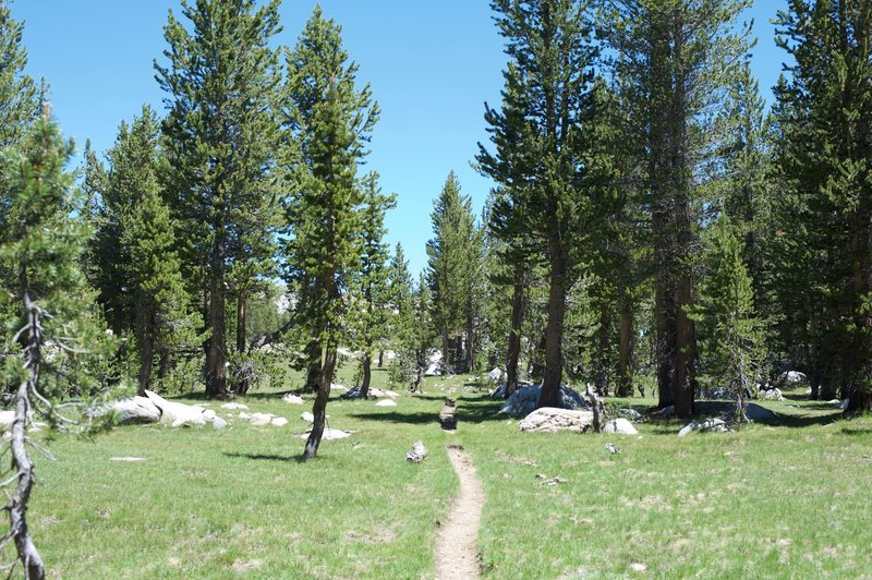 The trail narrows as it approaches the lake.  The trees begin to thin and more rocks appear.