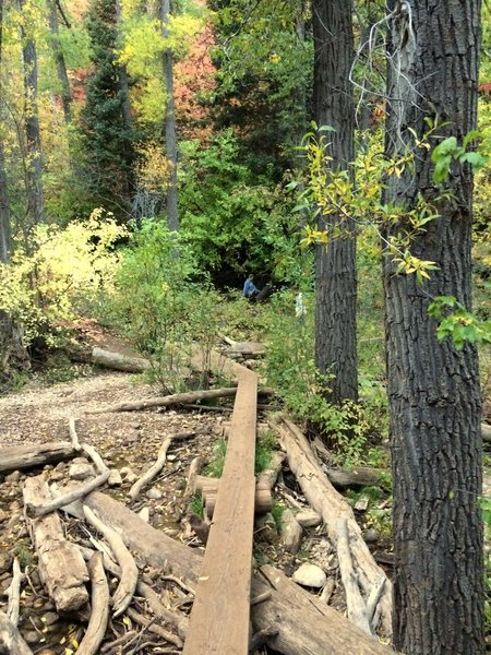 The log bridges that criss-cross the driftwood and stream.  Fantastic colors as well!