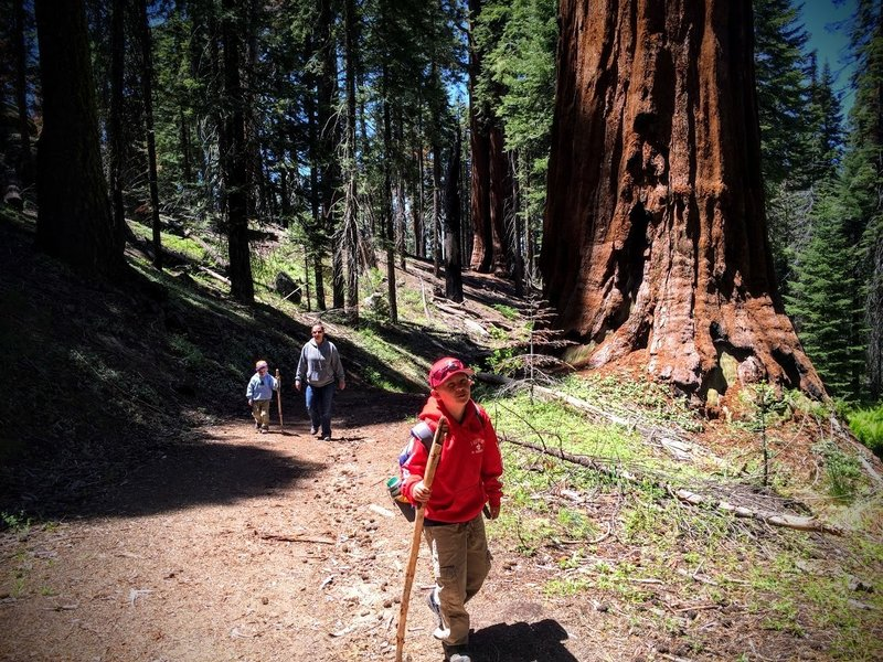North Grove Loop hike. Stay on loop to the right to complete loop trail.