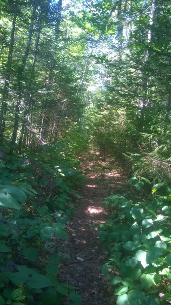 Trail has now been cleared. As of 2016.