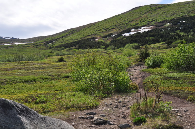 Trail as it climbs up the slope.
