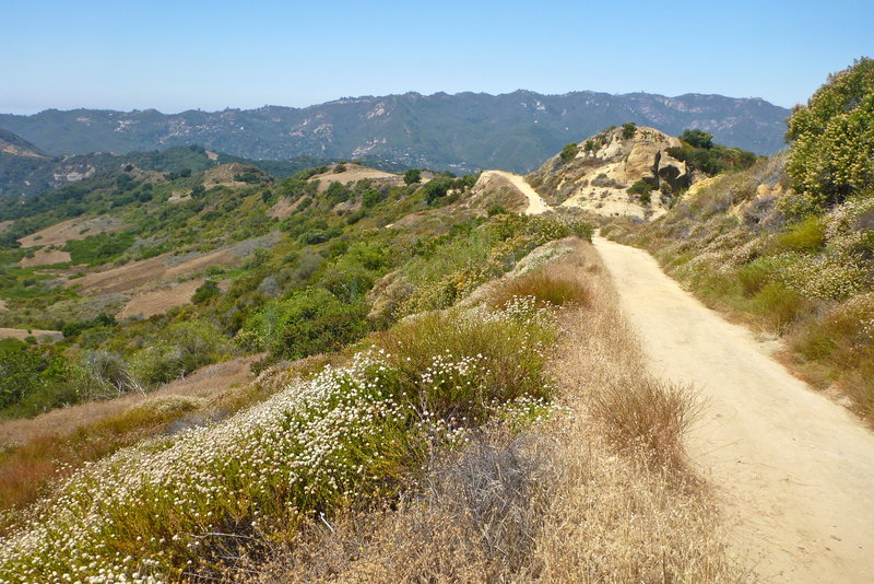 Eagle Springs Fire Road, Topanga State Park, CA. with permission from laollis