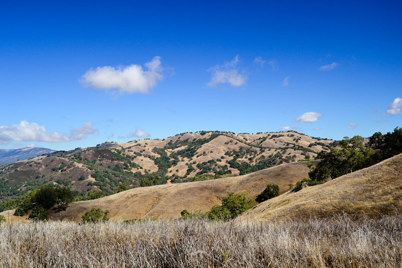 A lovely day in Henry Coe State Park.