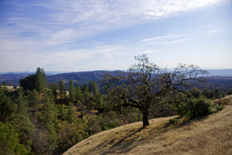 Morgan Hill, Henry W. Coe State Wilderness Park.