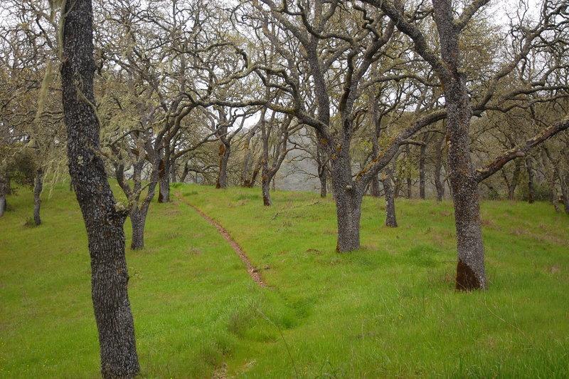 Middle Steer Ridge.