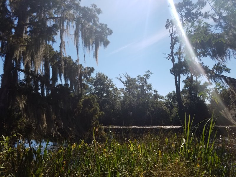 View out over Bayou Cane at the end of the trail.