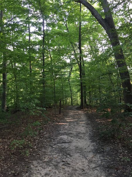 This is a photo taken from the east side of the lake, near the parking lot.  A good portion of the trail looks like this.